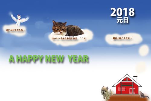 2018猫2.jpg